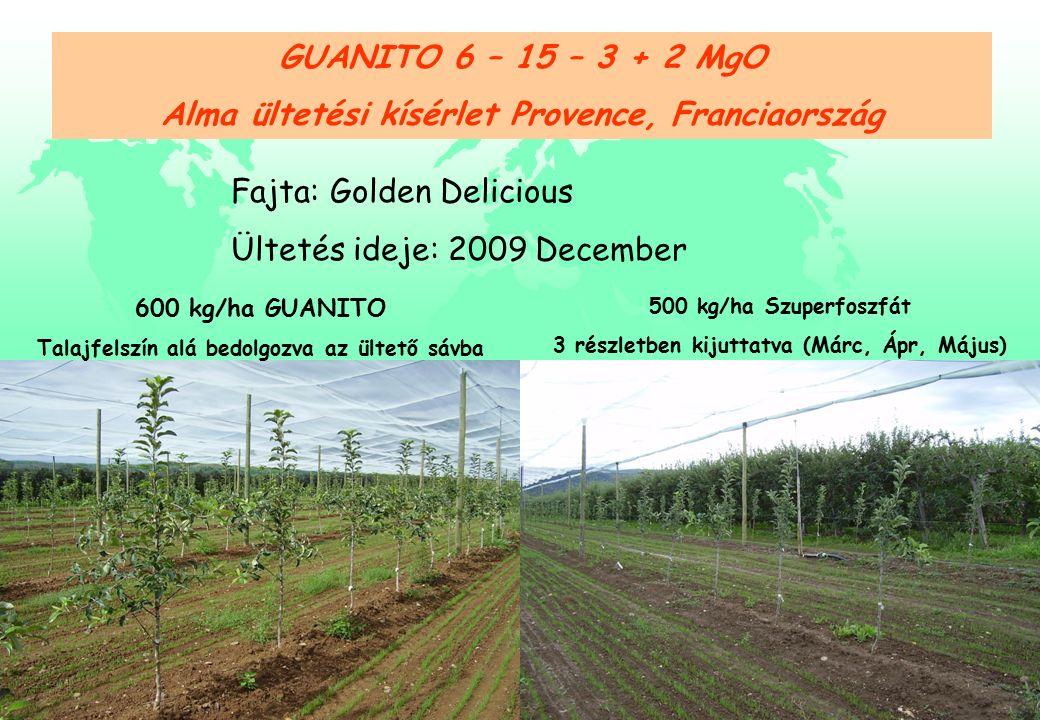 GUANITO 6 – 15 – 3 + 2 MgO Alma ültetési kísérlet Provence, Franciaország Fajta: Golden Delicious Ültetés ideje: 2009 December 600 kg/ha GUANITO Talajfelszín alá bedolgozva az ültető sávba 500 kg/ha Szuperfoszfát 3 részletben kijuttatva (Márc, Ápr, Május)