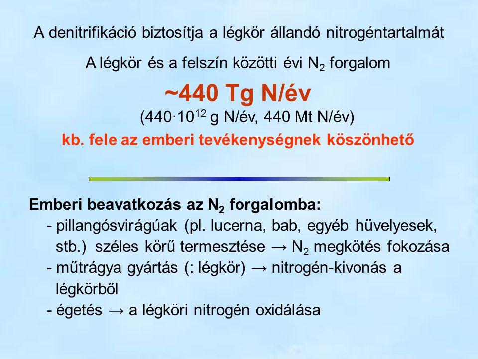 A denitrifikáció biztosítja a légkör állandó nitrogéntartalmát A légkör és a felszín közötti évi N 2 forgalom ~440 Tg N/év (440∙10 12 g N/év, 440 Mt N/év) kb.