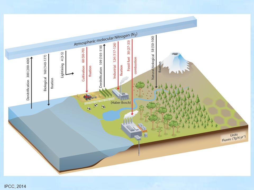 NO, NO 2 erősen reaktív (szabad gyök) → τ ≈ 1-2 nap koncentráció: forrásterületeken magas antropogén források koncentráltak (városok, autópályák, erőművek, stb.) természetes források egyenletesebb eloszlásúak (villámlás, denitrifikáció, biomassza égés, stb.) Koncentráció: városokban10-200 ppb vidéken 0,1-10 ppb óceánok felett 0,02-0,04 ppb (=20-40 ppt) NO, NO 2 száraz ülepedés – lassú kikerülés a légkörből: kémiai reakció (oxidáció)
