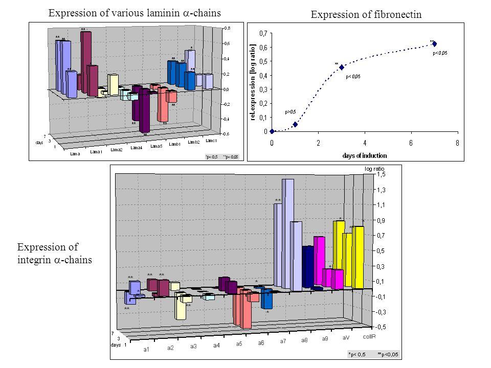 """Idegi nyúlványok fejlődése 1.Nyúlvány-kinövés – az idegsejt-polaritás kialakulása 2.Nyúlvány-növekedés (elongáció) 3.Irányválasztás – """"aktivitás-független benövés attraktív, repulzív, permisszív felületek Kötegelődés 4.Aktivitás-függő nyúlvány-szelekció"""