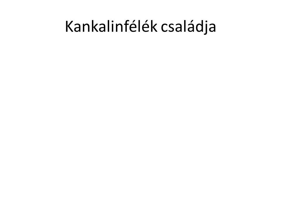 Kankalinfélék családja