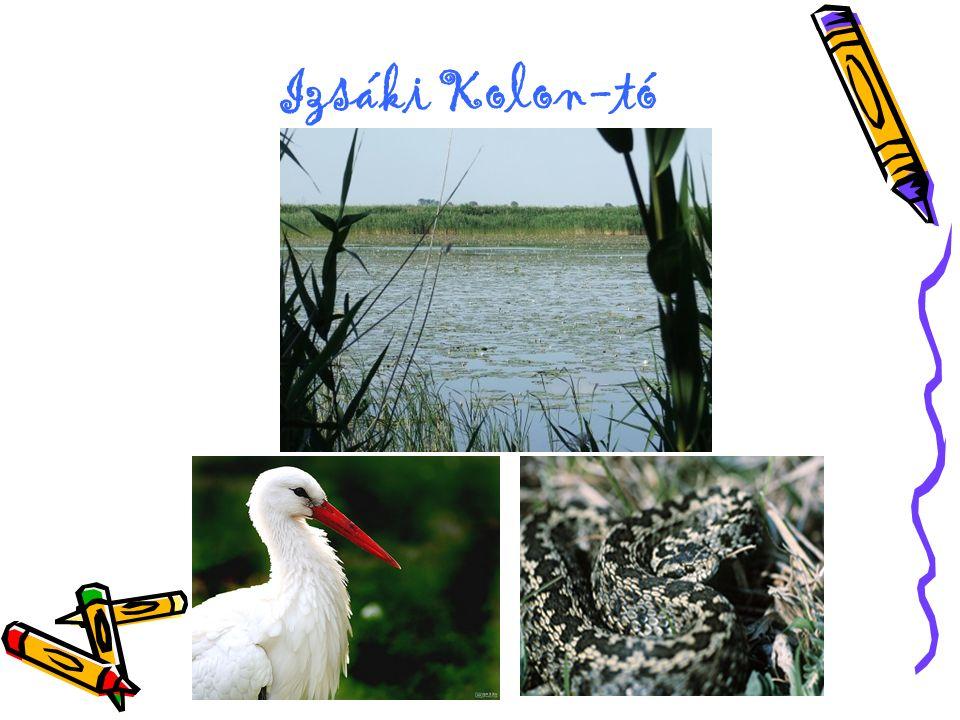 Izsáki Kolon-tó
