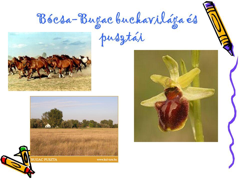Bócsa-Bugac buckavilága és pusztái