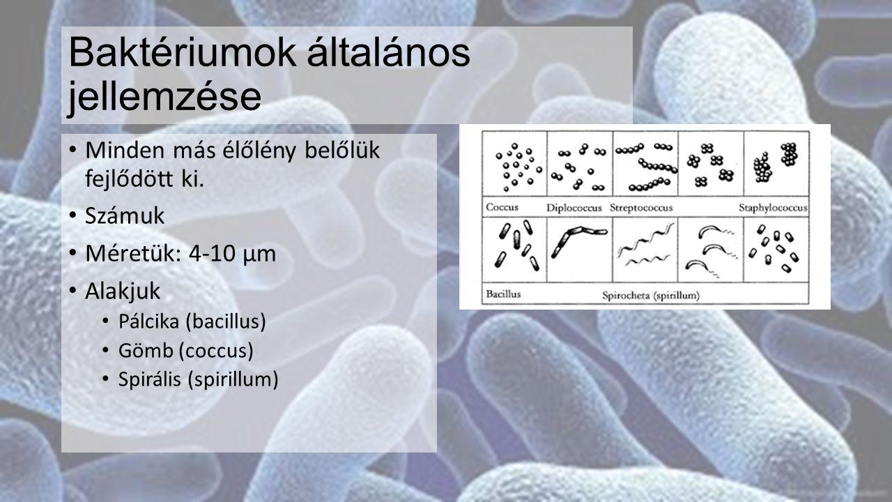 Baktériumok felépítése Sejthártya Csillók Sejtplazma Riboszómák Kör alakú (cirkuláris) DNS: prokarióták Plazmid Sejtfal: Gram-negatív Gram-pozitív Tok