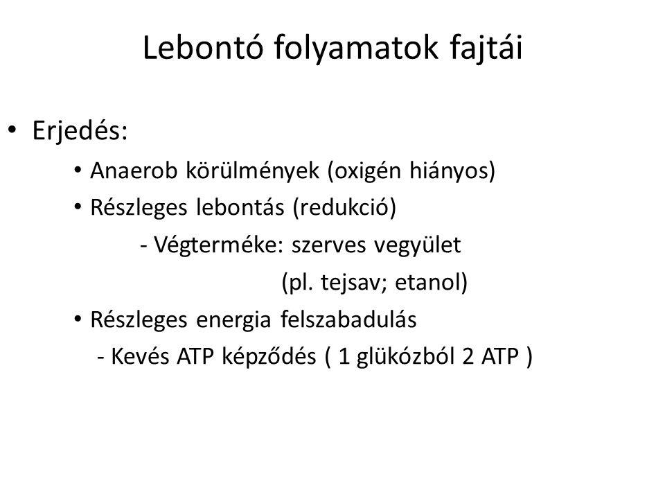 Lebontó folyamatok fajtái Erjedés: Anaerob körülmények (oxigén hiányos) Részleges lebontás (redukció) - Végterméke: szerves vegyület (pl. tejsav; etan