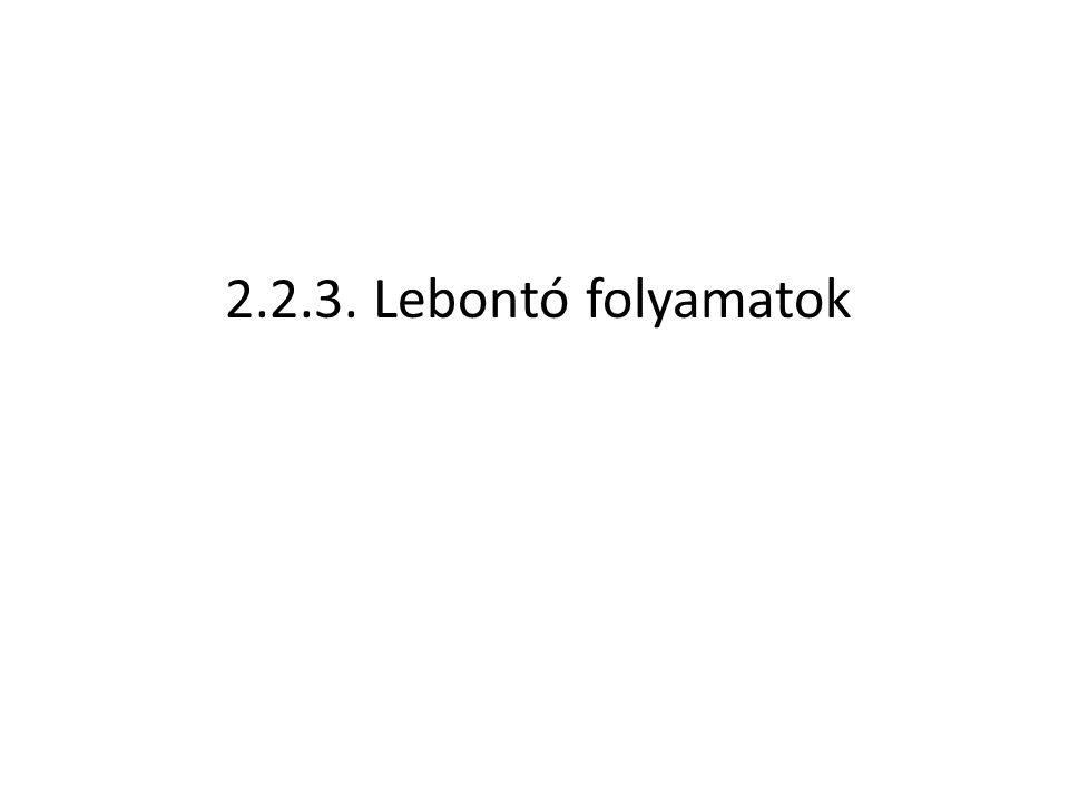 2.2.3. Lebontó folyamatok