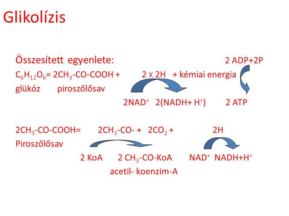 Glikolízis Összesített egyenlete: 2 ADP+2P C 6 H 12 O 6 = 2CH 3 -CO-COOH + 2 X 2H + kémiai energia glükóz piroszőlősav 2NAD + 2(NADH+ H + ) 2 ATP 2CH