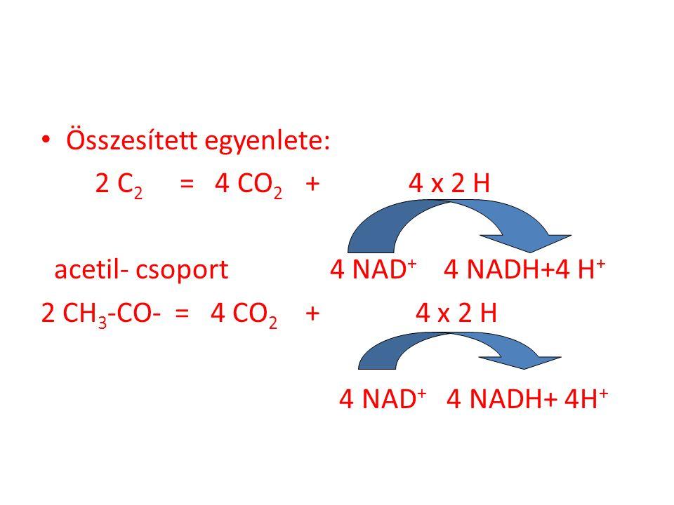 Összesített egyenlete: 2 C 2 = 4 CO 2 + 4 x 2 H acetil- csoport 4 NAD + 4 NADH+4 H + 2 CH 3 -CO- = 4 CO 2 + 4 x 2 H 4 NAD + 4 NADH+ 4H +