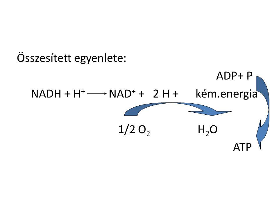 Összesített egyenlete: ADP+ P NADH + H + NAD + + 2 H + kém.energia 1/2 O 2 H 2 O ATP