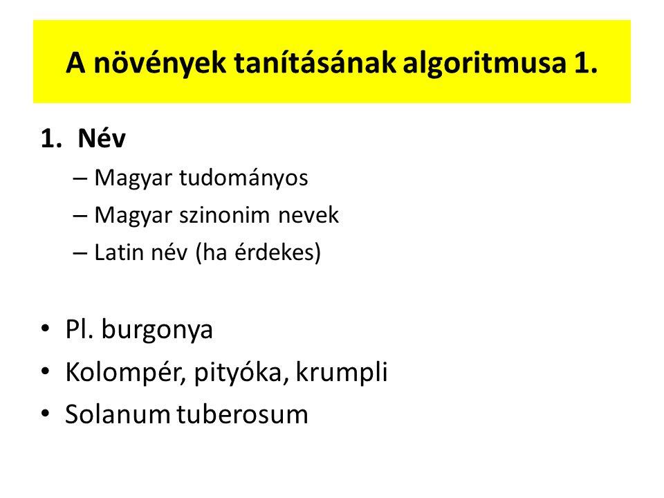 A növények tanításának algoritmusa 1. 1.Név – Magyar tudományos – Magyar szinonim nevek – Latin név (ha érdekes) Pl. burgonya Kolompér, pityóka, krump