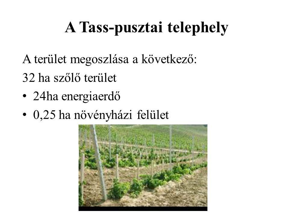 A terület megoszlása a következő: 32 ha szőlő terület 24ha energiaerdő 0,25 ha növényházi felület A Tass-pusztai telephely
