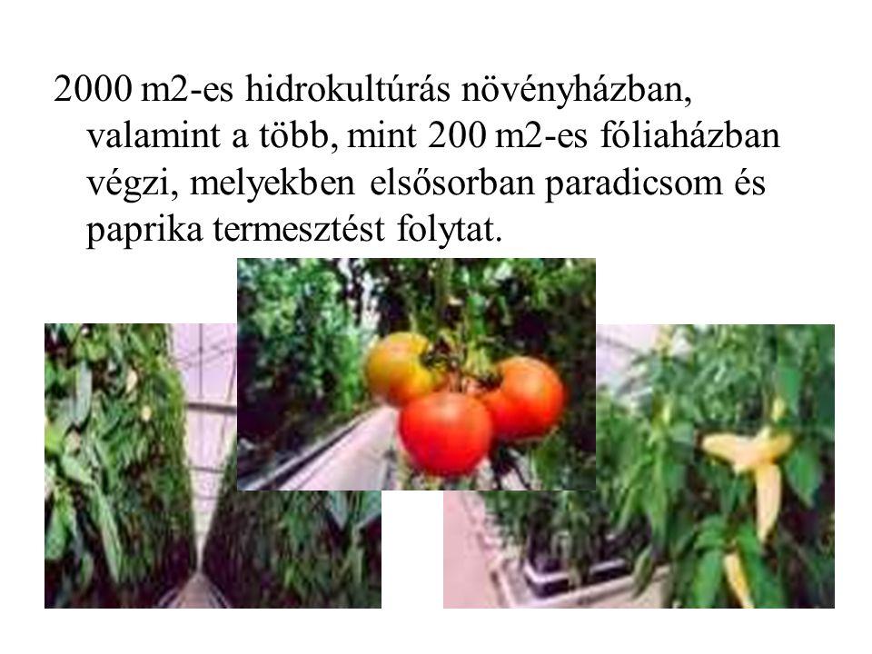 2000 m2-es hidrokultúrás növényházban, valamint a több, mint 200 m2-es fóliaházban végzi, melyekben elsősorban paradicsom és paprika termesztést folytat.