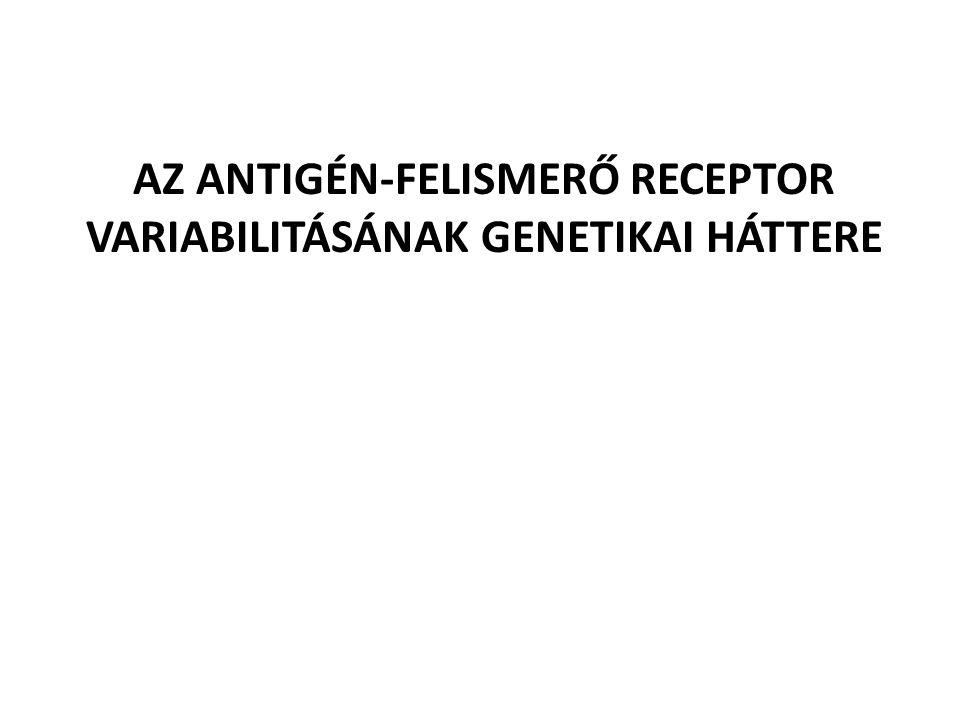 AZ ANTIGÉN-FELISMERŐ RECEPTOR VARIABILITÁSÁNAK GENETIKAI HÁTTERE