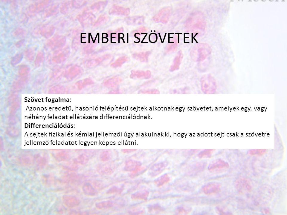 EMBERI SZÖVETEK Szövet fogalma: Azonos eredetű, hasonló felépítésű sejtek alkotnak egy szövetet, amelyek egy, vagy néhány feladat ellátására differenciálódnak.