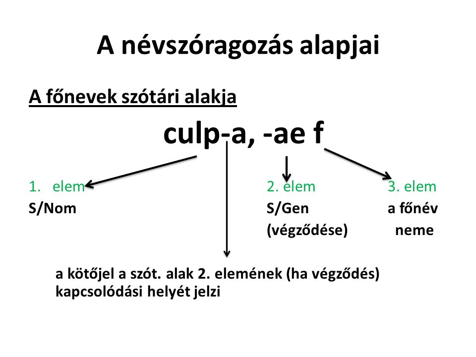 A névszóragozás alapjai A főnevek szótári alakja culp-a, -ae f 1.elem2.