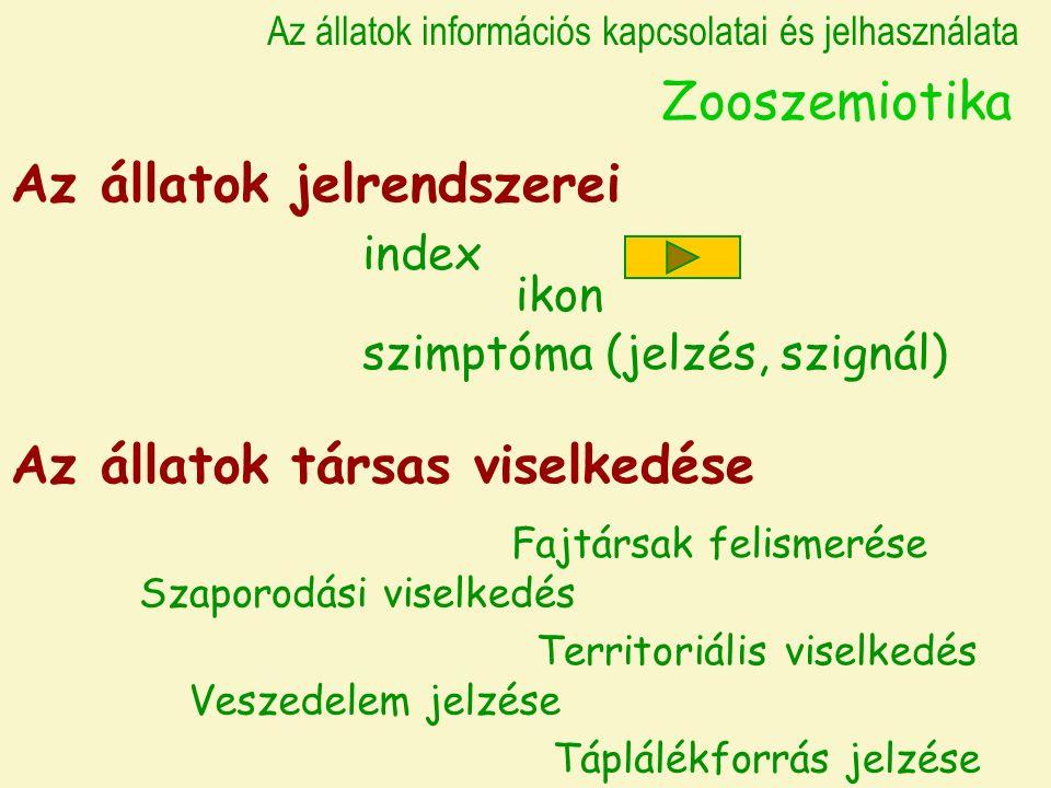 Az állatok információs kapcsolatai és jelhasználata Zooszemiotika Az állatok jelrendszerei index szimptóma (jelzés, szignál) ikon Az állatok társas viselkedése Fajtársak felismerése Szaporodási viselkedés Territoriális viselkedés Veszedelem jelzése Táplálékforrás jelzése