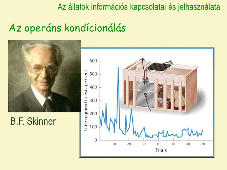 Az állatok információs kapcsolatai és jelhasználata Az operáns kondícionálás B.F. Skinner