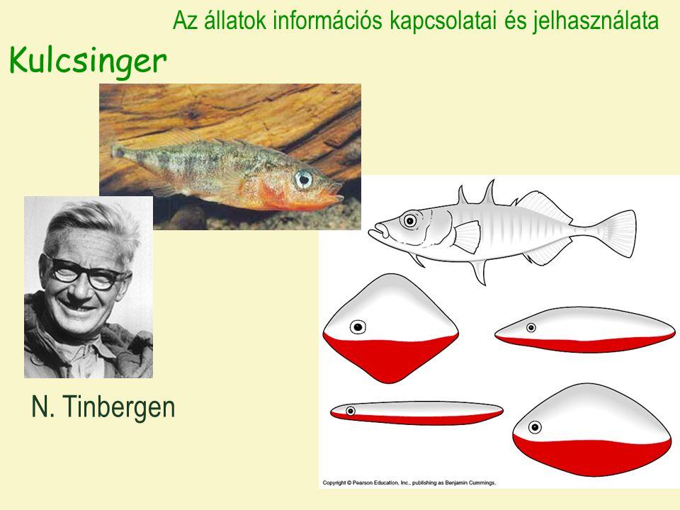 Kulcsinger N. Tinbergen Az állatok információs kapcsolatai és jelhasználata
