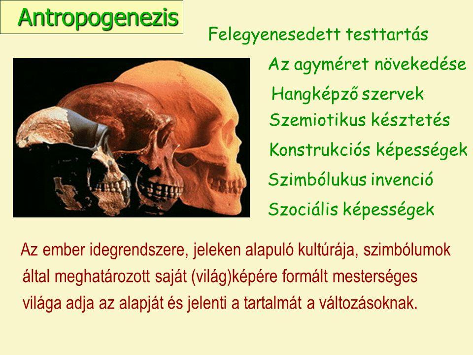Felegyenesedett testtartás Az agyméret növekedése Antropogenezis Szemiotikus késztetés Szimbólukus invenció Szociális képességek Az ember idegrendszere, jeleken alapuló kultúrája, szimbólumok által meghatározott saját (világ)képére formált mesterséges világa adja az alapját és jelenti a tartalmát a változásoknak.