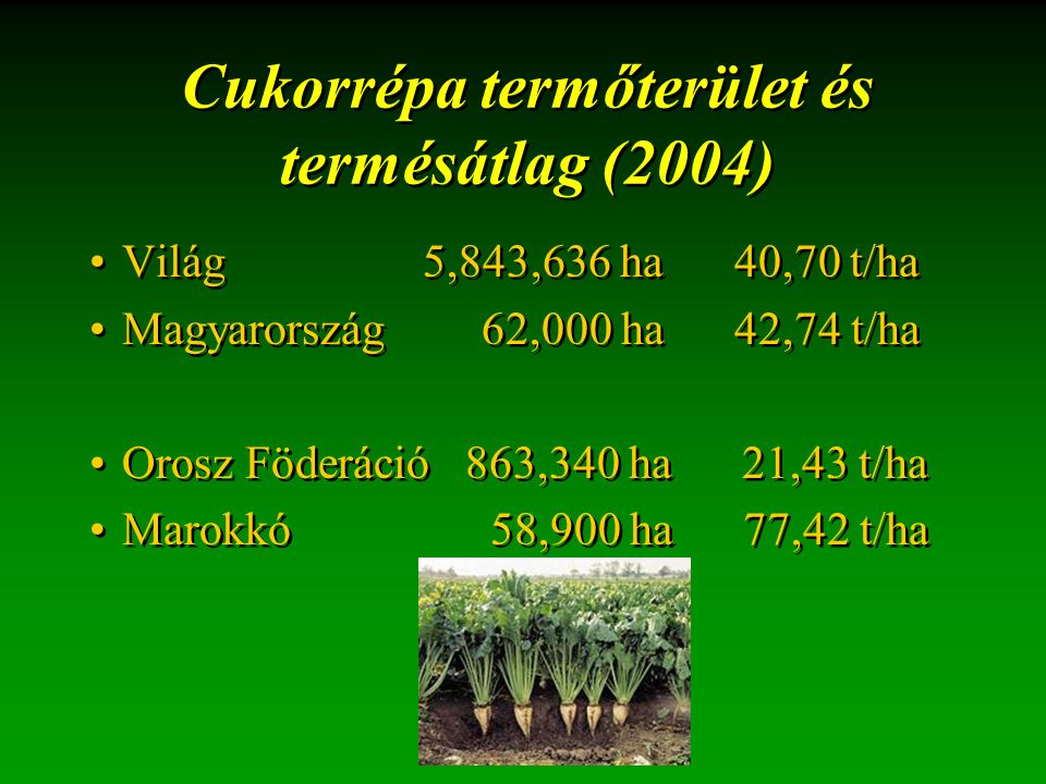 Cukorrépa termőterület és termésátlag (2004) Világ 5,843,636 ha 40,70 t/ha Magyarország 62,000 ha 42,74 t/ha Orosz Föderáció 863,340 ha 21,43 t/ha Marokkó 58,900 ha 77,42 t/ha Világ 5,843,636 ha 40,70 t/ha Magyarország 62,000 ha 42,74 t/ha Orosz Föderáció 863,340 ha 21,43 t/ha Marokkó 58,900 ha 77,42 t/ha