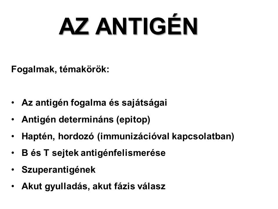 Fogalmak, témakörök: Az antigén fogalma és sajátságai Antigén determináns (epitop) Haptén, hordozó (immunizációval kapcsolatban) B és T sejtek antigénfelismerése Szuperantigének Akut gyulladás, akut fázis válasz AZ ANTIGÉN
