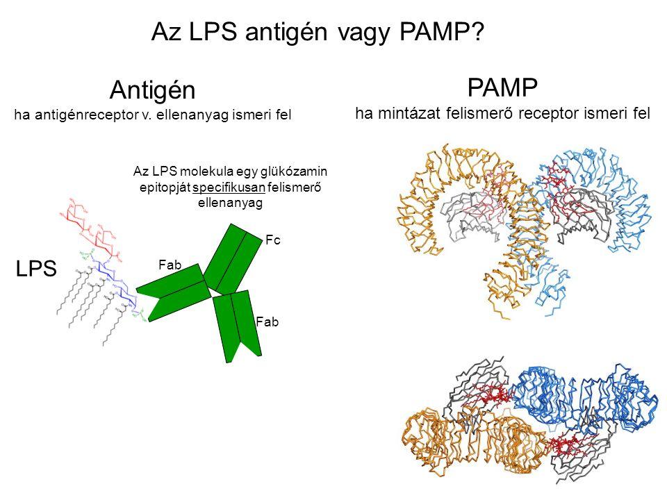 Az LPS antigén vagy PAMP. Antigén ha antigénreceptor v.