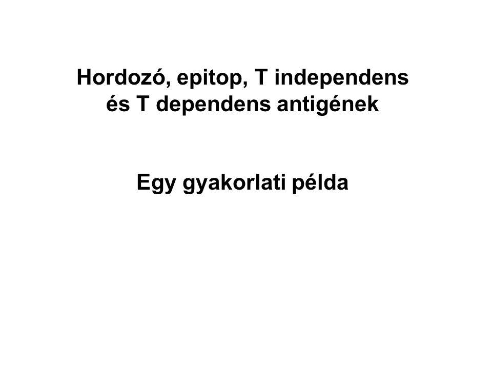 Hordozó, epitop, T independens és T dependens antigének Egy gyakorlati példa