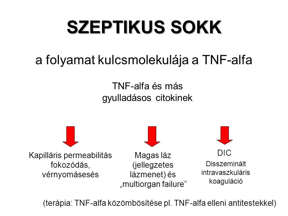 """SZEPTIKUS SOKK a folyamat kulcsmolekulája a TNF-alfa TNF-alfa és más gyulladásos citokinek Kapilláris permeabilitás fokozódás, vérnyomásesés DIC Magas láz (jellegzetes lázmenet) és """"multiorgan failure Disszeminált intravaszkuláris koaguláció (terápia: TNF-alfa közömbösítése pl."""