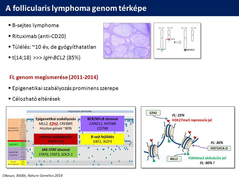 A follicularis lymphoma genom térképe  B-sejtes lymphoma  Rituximab (anti-CD20)  Túlélés: ~10 év, de gyógyíthatatlan  t(14;18) >>> IgH-BCL2 (85%)