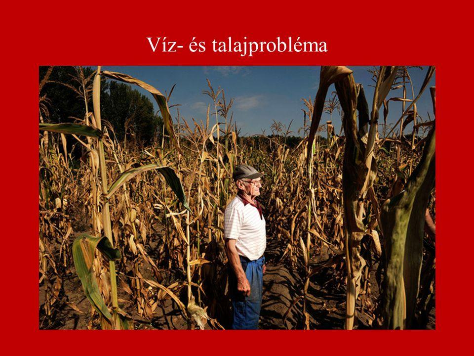 Víz- és talajprobléma