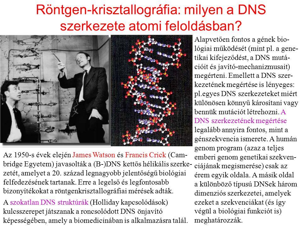Röntgen-krisztallográfia: milyen a DNS szerkezete atomi feloldásban? Az 1950-s évek elején James Watson és Francis Crick (Cam- bridge Egyetem) javasol
