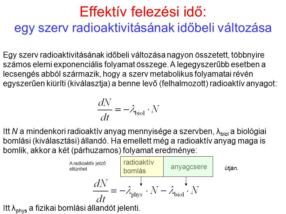 Effektív felezési idő: egy szerv radioaktivitásának időbeli változása Egy szerv radioaktivitásának időbeli változása nagyon összetett, többnyire számo
