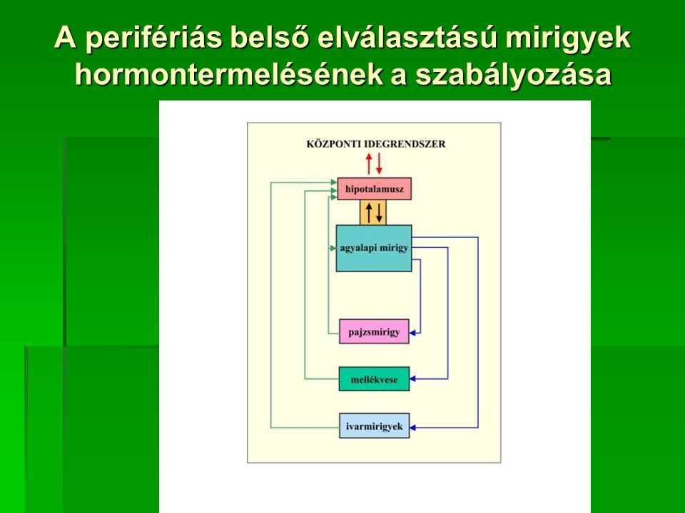 A perifériás belső elválasztású mirigyek hormontermelésének a szabályozása
