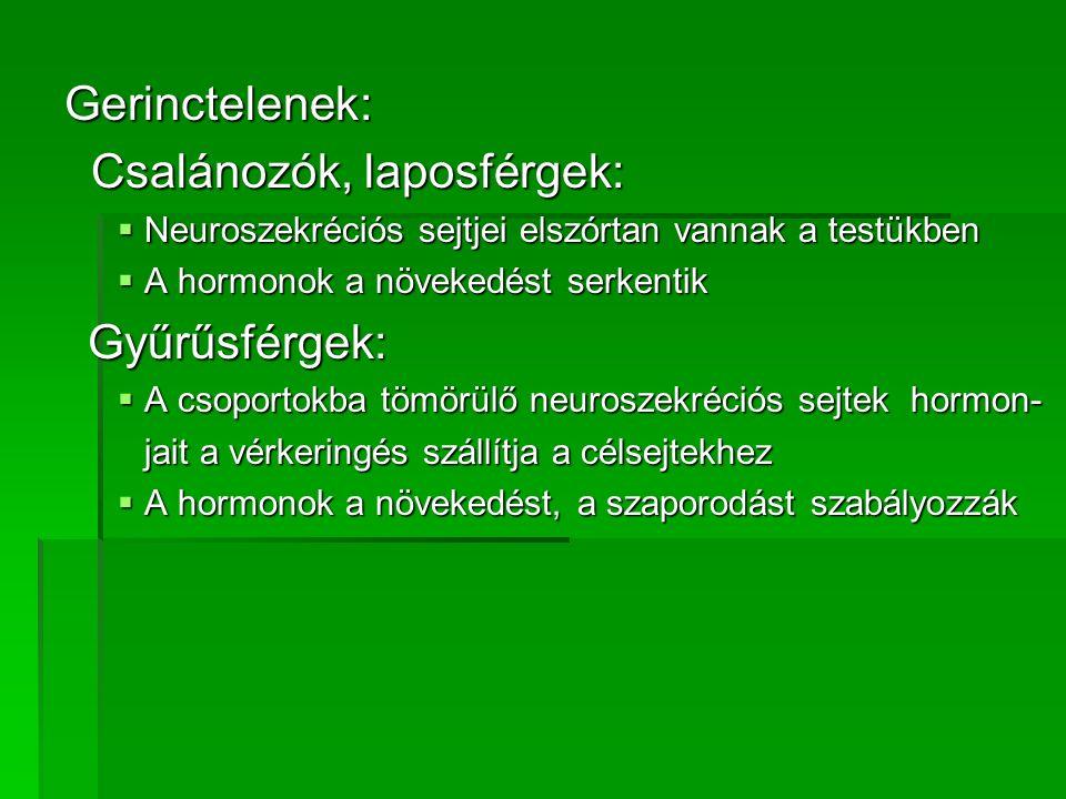 Gerinctelenek: Csalánozók, laposférgek: Csalánozók, laposférgek:  Neuroszekréciós sejtjei elszórtan vannak a testükben  A hormonok a növekedést serk
