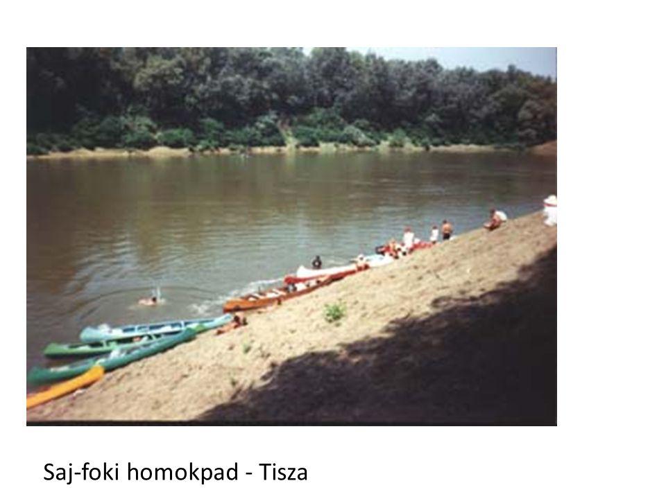 Saj-foki homokpad - Tisza