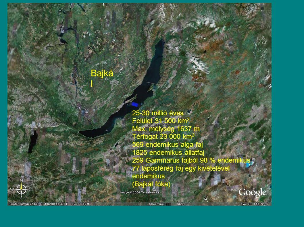 Bajká l 25-30 millió éves Felület 31 500 km 2 Max. mélység 1637 m Térfogat 23 000 km 3 569 endemikus alga faj 1825 endemikus állatfaj 259 Gammarus faj