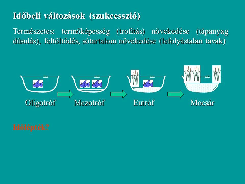 Időbeli változások (szukcesszió) Természetes: termőképesség (trofitás) növekedése (tápanyag dúsulás), feltöltődés, sótartalom növekedése (lefolyástalan tavak) OligotrófMezotróf Eutróf Mocsár Időlépték