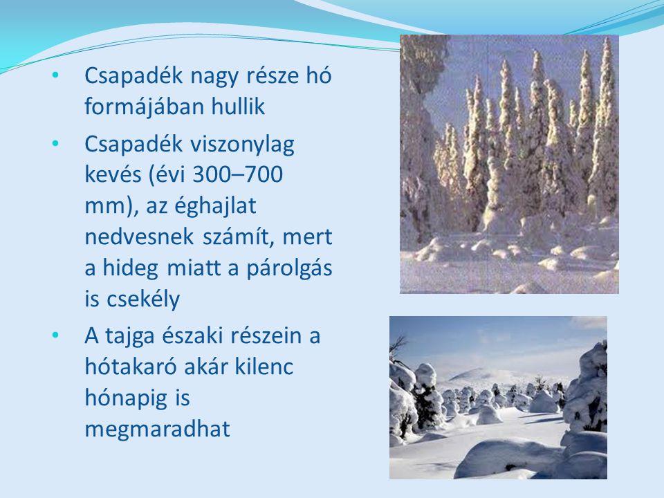 Csapadék nagy része hó formájában hullik Csapadék viszonylag kevés (évi 300–700 mm), az éghajlat nedvesnek számít, mert a hideg miatt a párolgás is csekély A tajga északi részein a hótakaró akár kilenc hónapig is megmaradhat