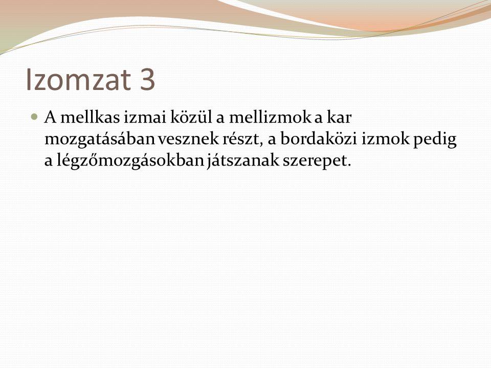 Izomzat 3 A mellkas izmai közül a mellizmok a kar mozgatásában vesznek részt, a bordaközi izmok pedig a légzőmozgásokban játszanak szerepet.
