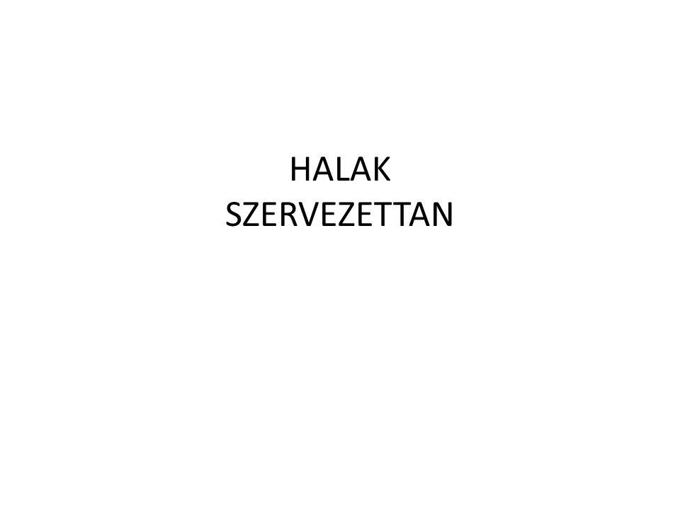 HALAK SZERVEZETTAN