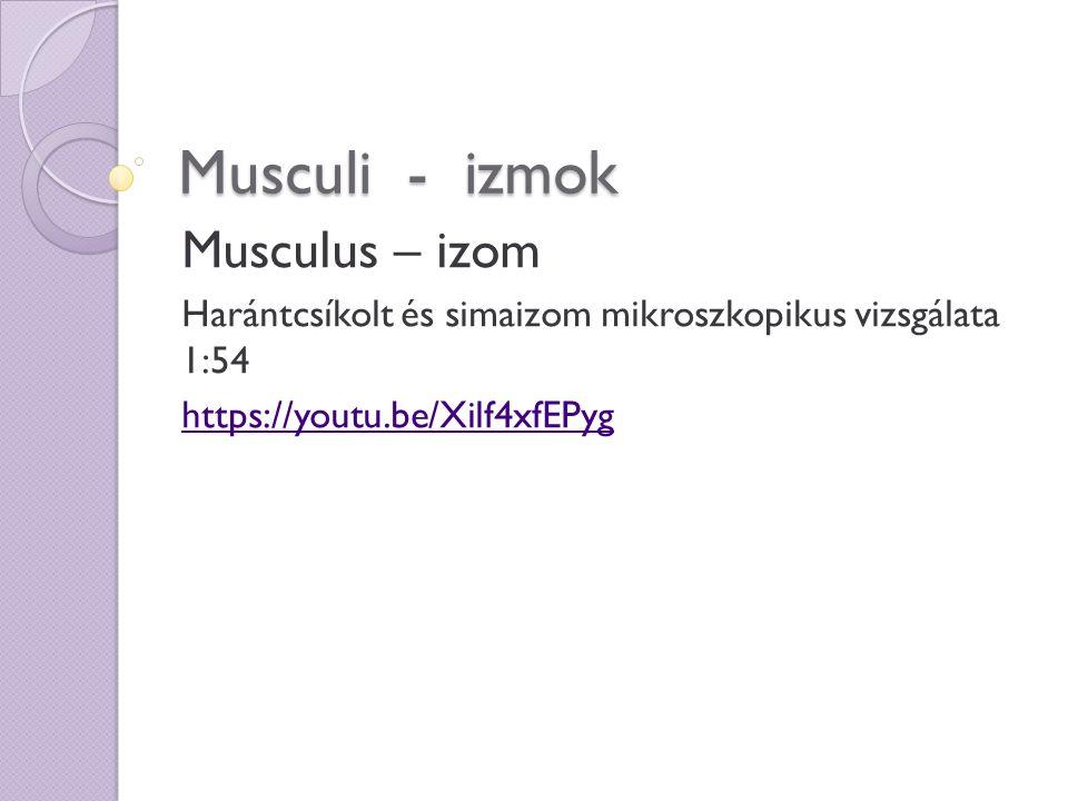 Musculi - izmok Musculus – izom Harántcsíkolt és simaizom mikroszkopikus vizsgálata 1:54 https://youtu.be/Xilf4xfEPyg