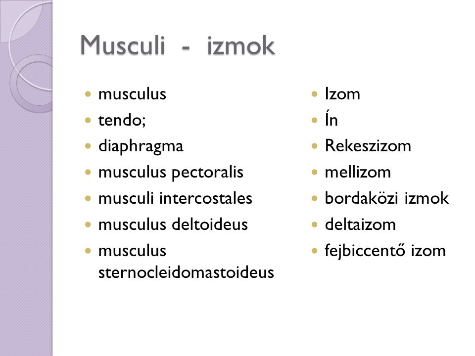 Musculi - izmok musculus tendo; diaphragma musculus pectoralis musculi intercostales musculus deltoideus musculus sternocleidomastoideus Izom Ín Rekeszizom mellizom bordaközi izmok deltaizom fejbiccentő izom