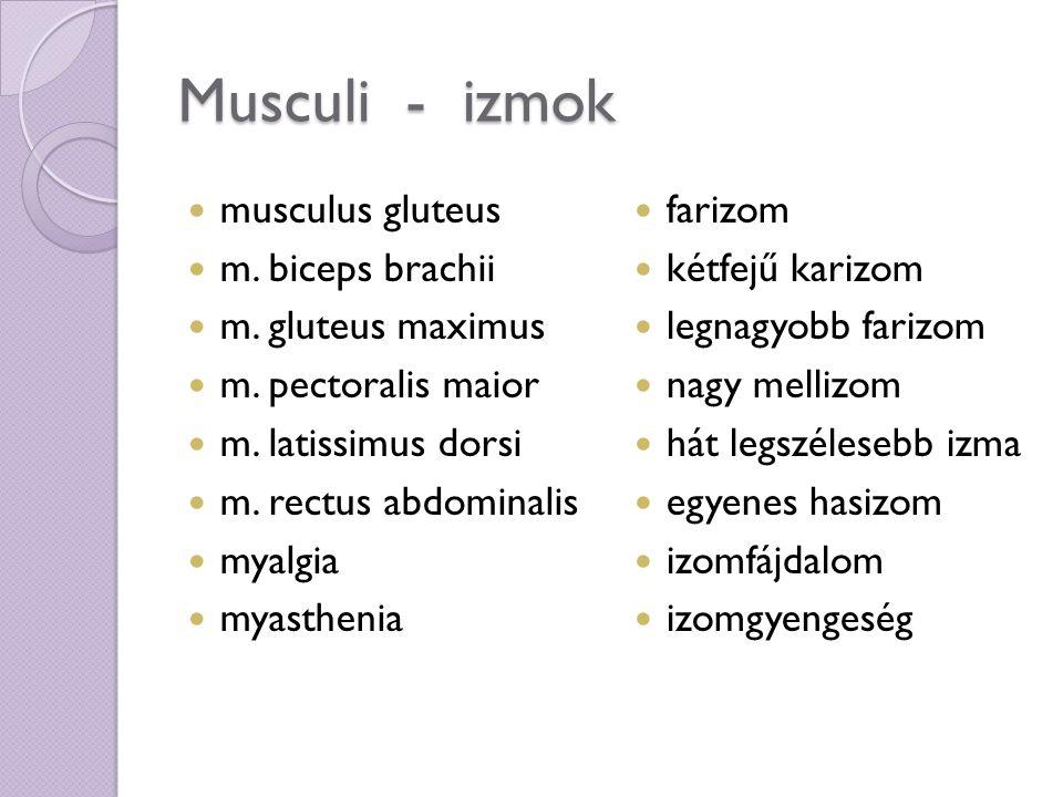 Musculi - izmok Myatonia –atonia myatrophia myonecrosis myopathia myoplegia synovia adductor; -oris abductor; -oris sphincter izom tónustalansága izomsorvadás izomelhalás izombántalom izombénulás ízületi nedv közelítő Távolító Szűkítő