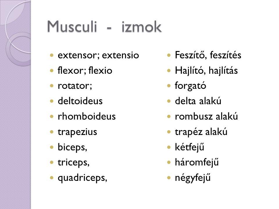 Musculi - izmok extensor; extensio flexor; flexio rotator; deltoideus rhomboideus trapezius biceps, triceps, quadriceps, Feszítő, feszítés Hajlító, hajlítás forgató delta alakú rombusz alakú trapéz alakú kétfejű háromfejű négyfejű