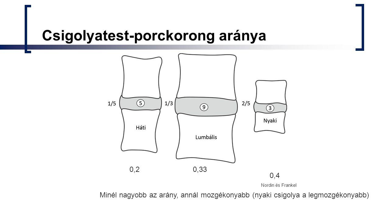 Csigolyatest-porckorong aránya Minél nagyobb az arány, annál mozgékonyabb (nyaki csigolya a legmozgékonyabb) 0,20,33 0,4 Nordin és Frankel