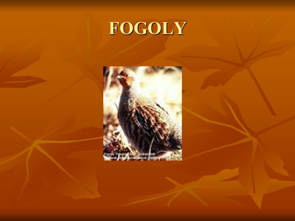 FOGOLY