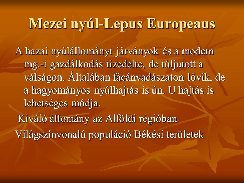 Mezei nyúl-Lepus Europeaus A hazai nyúlállományt járványok és a modern mg.-i gazdálkodás tizedelte, de túljutott a válságon. Általában fácánvadászaton