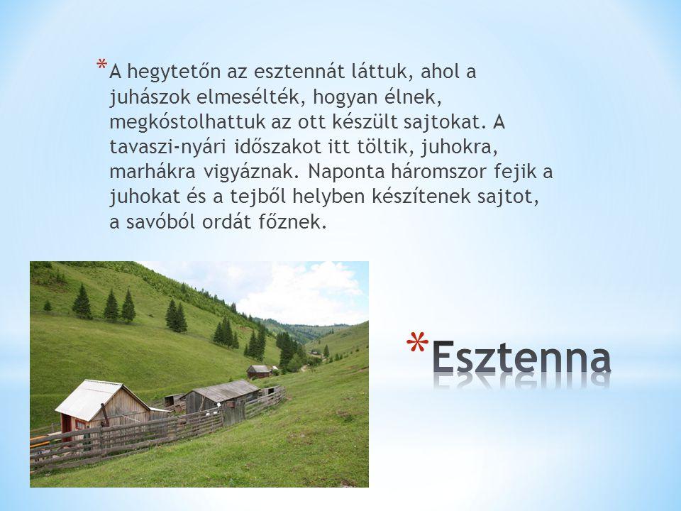 * A hegytetőn az esztennát láttuk, ahol a juhászok elmesélték, hogyan élnek, megkóstolhattuk az ott készült sajtokat.