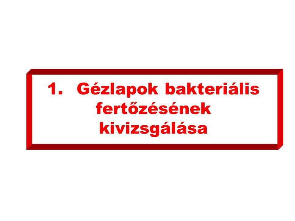 1.Gézlapok bakteriális fertőzésének kivizsgálása