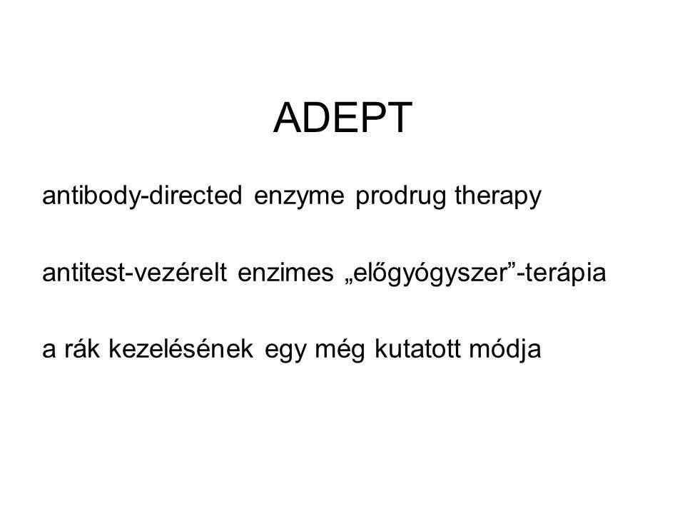 """ADEPT antibody-directed enzyme prodrug therapy antitest-vezérelt enzimes """"előgyógyszer""""-terápia a rák kezelésének egy még kutatott módja"""
